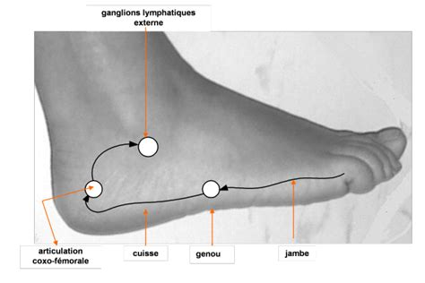 douleur sur le cote exterieur du pied ceinture pelvienne et membres inf 233 rieurs s informer sur la r 233 flexologie plantaire