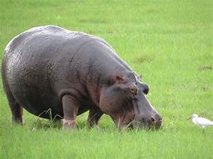 Animals of Southern Africa | connorandkellymarchforth