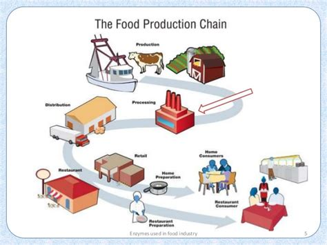 cuisine industrie enzymes in food industry