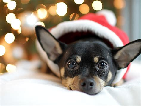 Santa Paws Are Comin' To Town! They've Donned Their