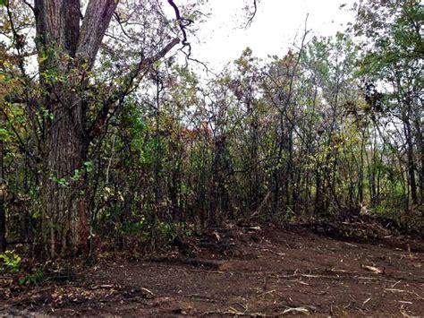 bushwackers land clearing   afterbushwackers land