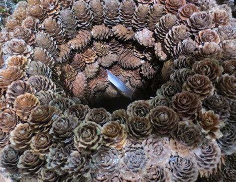 Kranz Aus Zapfen by Kranz Zapfen Natur 30 Cm Einseitig Versand F 252 R Blumen