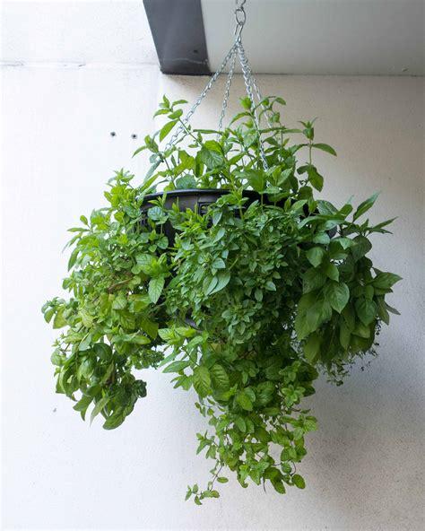 hanging herb garden indoor herb garden ideas for beginners indoor plants expert