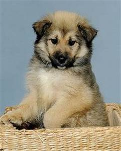 omg, I want them. Keeshond/Husky Mix | Mans best friend