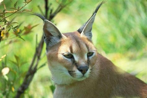 Herbivores Wild Animal Best Blog