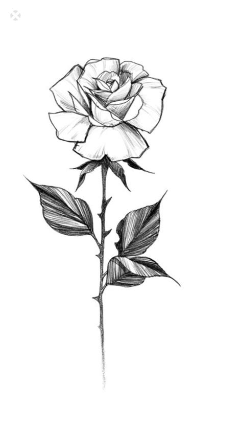 Newest Free of Charge single rose drawing Ideas With this tutorial, we will examine … | Rose