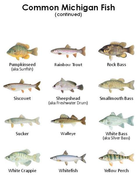 eaton rapids joe eating wild caught fish
