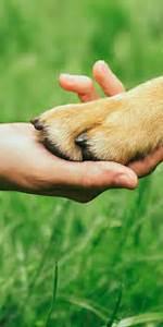 Hund Im Garten Vergraben : schn ffelfreunde das portal f r alle hundefreunde ~ Lizthompson.info Haus und Dekorationen