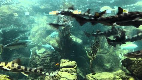 Shark Tank The Seaworld San Diego Aquarium Youtube