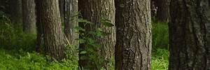 comment realiser un badigeon pour proteger le tronc page 2 With maison en tronc d arbre 12 larbre de jesse