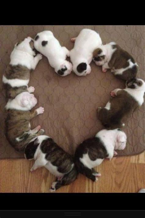 pin  ashley kearns    love baby animals baby