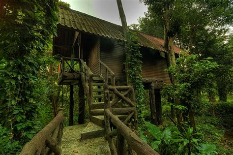 top  beautiful  amazing tree house wallpaperspics