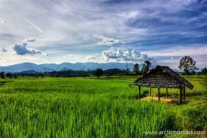 Thailand Rice Fields | Someday... | Pinterest | Fields
