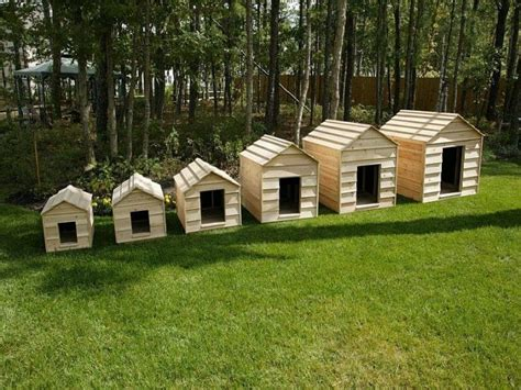 build  dog house sort   confusion