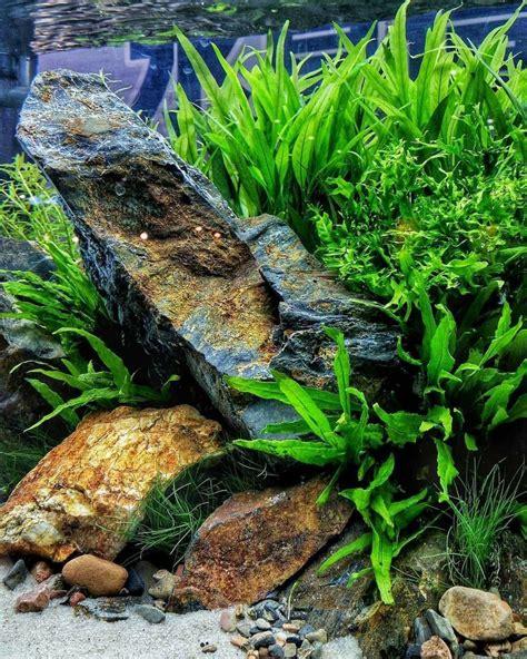 aquascape fish 919 best aquarium fish tank aquascape aquascaping