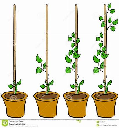 Growing Plant Clipart Stages Growth Royalty Seeds