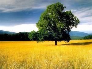 Beautiful Nature (Album 29)