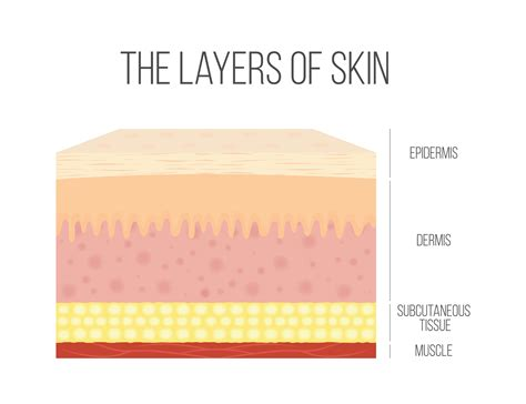 15 Things You Didn't Know About Your Skin