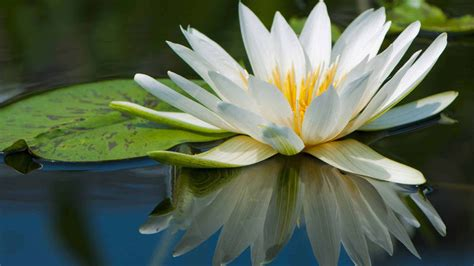 water flowers may 4 2015 the whispering pen