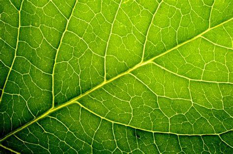 self healing solar cells mimic plant leaves to repair