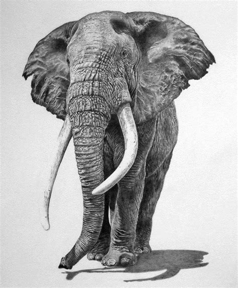 beautiful  realistic animal drawings
