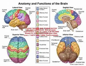 Learning And Brain Functions