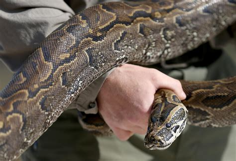 worlds deadliest insane snake attacks warning