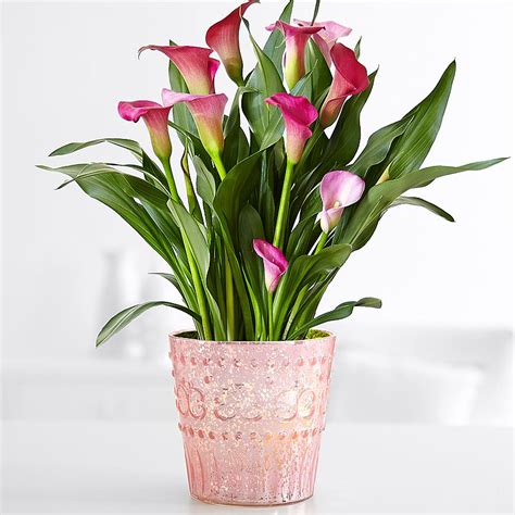 potted flowers flower plants plants delivery