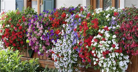 tipps fuer praechtige balkonblumen mein schoener garten