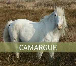 Durée De Vie Cheval by Fiche Race Cheval Camargue Taille Poids Morphologie Robe