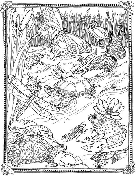 lilypad pond coloring page great biology coloring page