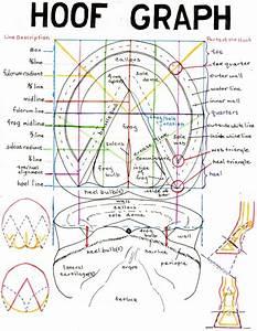 Horse Anatomy Pictures
