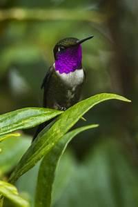A Guide To Ecuador39s Different Hummingbirds