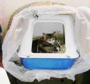 Cabane Pour Chat Exterieur Pas Cher : construire un abri pour chats chats libres de n mes agglo ~ Teatrodelosmanantiales.com Idées de Décoration