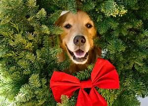 Golden Retriever Christmas Backgrounds 25 Cool Hd ...