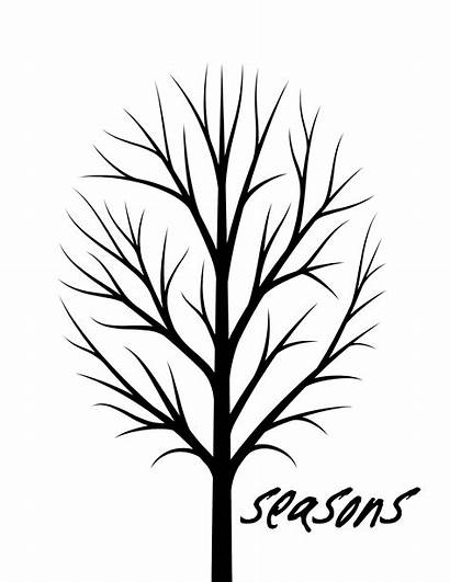 Tree Seasons Printable Leaves Drawing Project Cherry