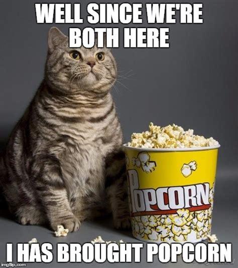 Popcorn Eating Meme - cat eating popcorn imgflip