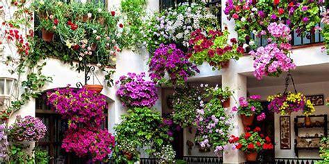 terrazzo in fiore le caratteristiche e i benefici di alcuni fiori gelsomino