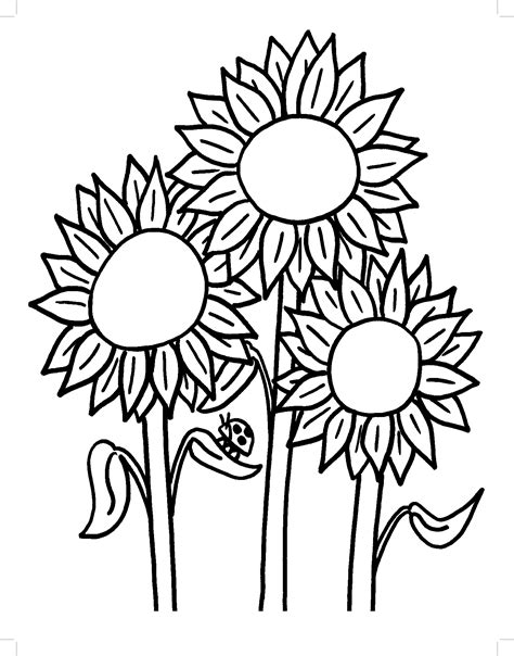 sunflower coloring pages  adults  getcoloringscom