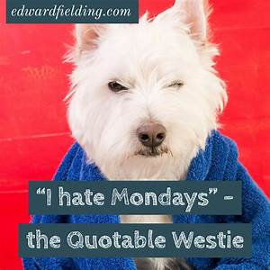 I hate Mondays – Dogford Studios