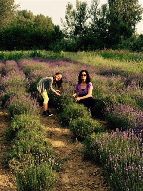 Wohnung Mit Garten Parndorf by Kreative Lavendelprodukte Aus Parndorf Neusiedl Am See