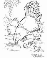 Coloring Farm Animals Animal Printable sketch template