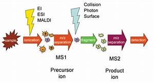 Tandem Mass Spectrometry  Ms  Ms