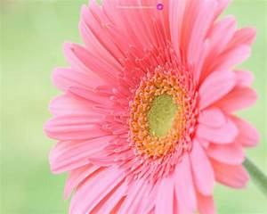 Wallpapers: Flower Wallpapers