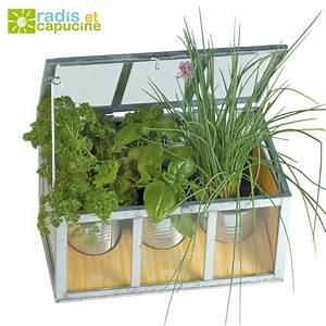 Serre Pour Plante : plantes aromatiques semer dans un chassis en verre ~ Premium-room.com Idées de Décoration
