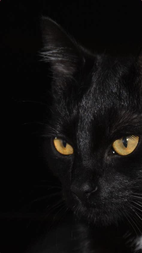iphone black cat wallpaper in 2020 cat wallpaper