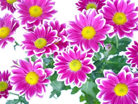 Beautiful Flowers With Pink And Yellow And Green Leaves-hd