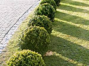 Arbustes Décoratifs à Fleurs : comment bien choisir ses arbustes pour le jardin ~ Premium-room.com Idées de Décoration