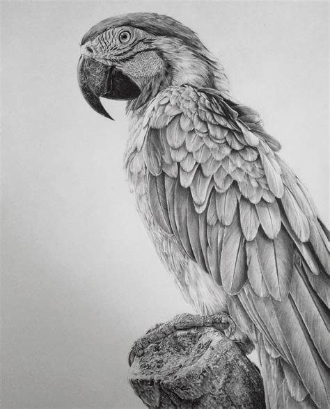 pencil drawings   artist   addicted  detail
