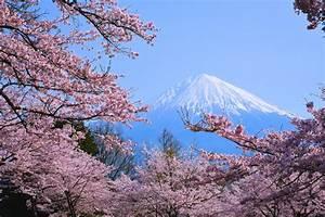 King Holidays e l'Hanami: tutti i colori della Primavera